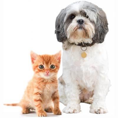 La Deebot 300 es adecuada para hogares con mascotas