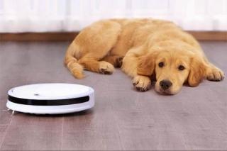 Xiaomi Xiaowa mascotas